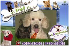 Puf (Love Pets - Pet Shop Banho e Tosa) Tags: animal sp gato e cachorro petshop banho puf estetica rioclaro tosa taxidog lovepets vilapaulista