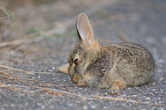Rabbit DSC_3010 by Mully410 * Images