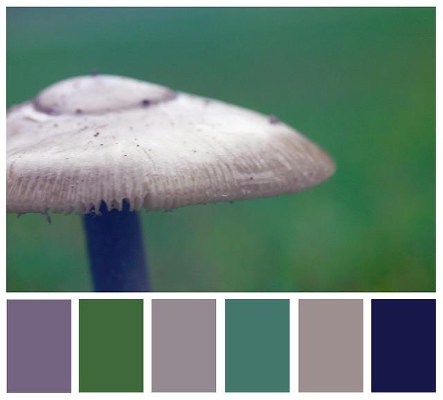 Mushroom Palette