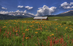 Wildflowers (Thad Roan - Bridgepix) Tags: travel blue wild summer sky mountain snow flower building tourism grass festival clouds landscape photo colorado image picture meadow aspen crestedbutte gunnison 201107