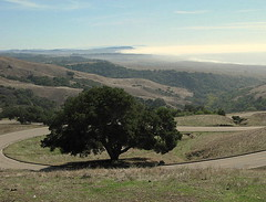 HIGH UP, BUT A BEAUTIFUL VISTA... (vermillion$baby) Tags: crookedroad hearstcastle lonelytree tree ocean pacificocean blue california green lonley mountain road roads sky vista path sansimeon coastline cloud landscape trail clouds highwaysandroads coast beach pacific trees shore