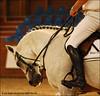 bmc QUALITY TIME (Lù *) Tags: horse salto cavallo pferd csi showjumping concorso concorsoippico sanpatrignano