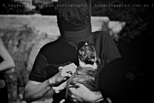 Cuddle by twoguineapigs pet photography