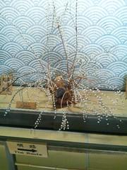 花餅の写真