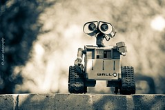 WALL-E (Amir Abdel Shafy) Tags: 2 bw white black color green slr monochrome wheel yellow wall canon pose toy photography rebel robot photo model kiss eva control earth wheels egypt class e pixar egyptian amir animation vegetation wireless remote session waste dslr studios load extraterrestrial lifter xsi walle allocation amirphotography weekendshowcase evaluato