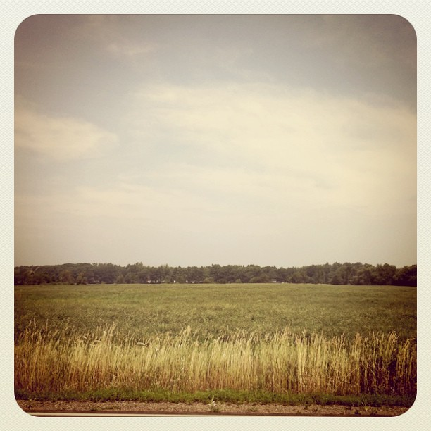Day 11 : en route to Portsmouth - field of alfalfa