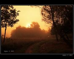 Morning In The Dordogne. (Picture post.) Tags: morning trees summer sunlight mist green nature sunrise landscape track trail paysage arbre soe platinumheartaward blinkagain