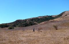 Solo Field Run (Ari Lynn Day) Tags: california summer camp man beautiful alone cattle running hills backcountry southerncalifornia orangecounty athlete irvine newportcoast bommercanyon