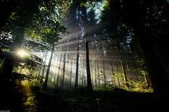 Quand le soleil éclaire la foret de ces rayons ** When the sun lights the forest of these rays ** (francky25) Tags: de la soleil le ces foret rayons quand doubs comté franche éclaire alaise