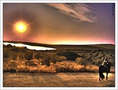 Al comps de la laguna (Toms Rojas) Tags: naturaleza caballos olympus crdoba aguilardelafrontera lagunazoar