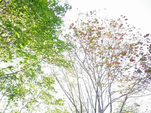 秋色彩々2