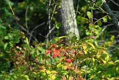 AUTUMN (ONE/MILLION) Tags: travel flowers trees red vacation plants lake green water colors landscape outdoors photo milk google interesting pond weed woods colorful flickr hole image photos wildlife massachusetts blossoms visit images blooms tours falmouth find onemillion williestark falmouthday1