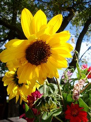 (becca_person) Tags: flowers red green beautiful yellow rural la country missouri plata alliance possibilities possibility bucay