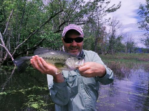 Champlain Bass