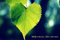 Hearts n Hearts (Pieces Of Tyme Photography) Tags: lighting light summer sun tree nature leaves season leaf nikon heart natural bokeh creative indiana shade handheld create shape heartshape twitter followmeontwitter