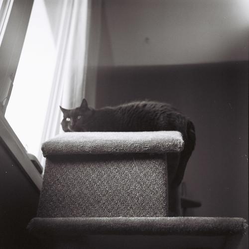 Sam the Cat looking suspicious.