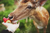 a close encounter (In Memory Lane~) Tags: park summer london nature 35mm dof bokeh mark richmond deer ii 5d fallow 35l