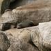 A costa neozelandesa possui muitas focas
