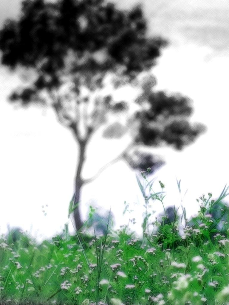 grass field after rainy