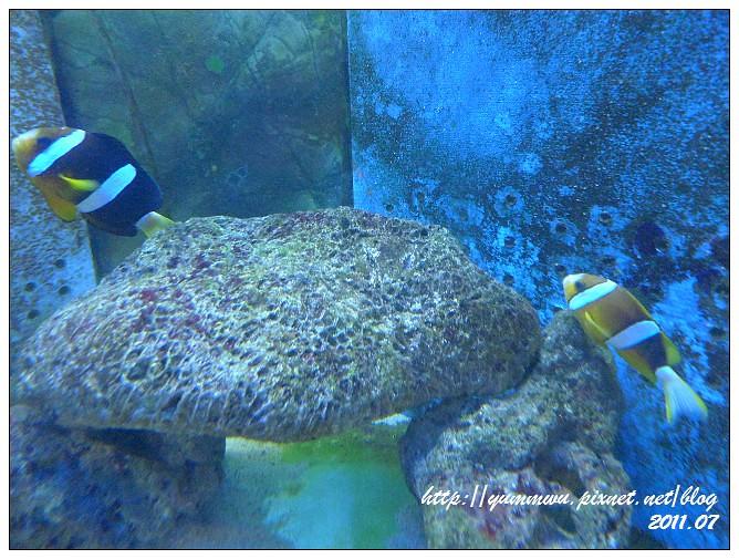110711小丑魚主題館 (13)