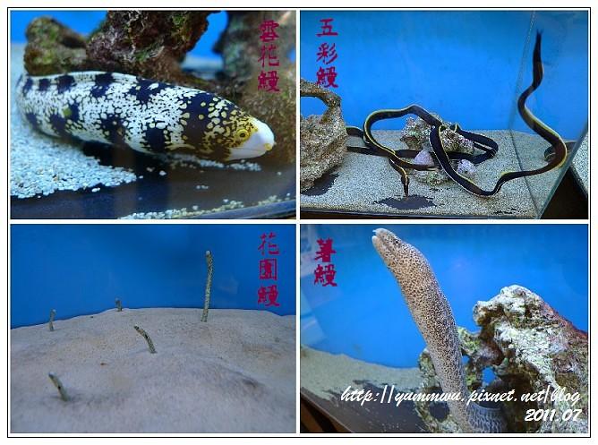 110711小丑魚主題館(1)