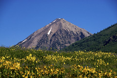 Wildflowers, Crested Butte, Colorado (Thad Roan - Bridgepix) Tags: blue wild sky mountain flower green nature yellow festival landscape photo colorado image picture wildflowers crestedbutte 201107