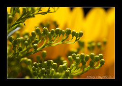 Thanks ! (Marjo1963) Tags: flowers macro verjaardag bouquet bloemen boeket flickrsbest achromat overtheexcellence 072011
