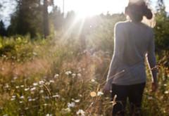 Sunshine, Sunshine. (Deanna Miller.) Tags: sun daisies bright gray warmth greenery deannamarie