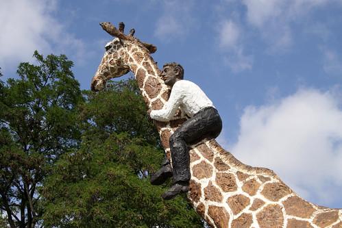 Mann auf Giraffe