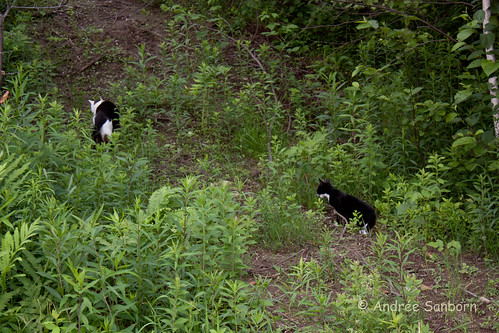 Buddy & Oscar Take a Hike-3.jpg