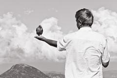 Bird in Hand (nixter) Tags: savedbythehotboxuncensoredgroup 7dbwbirdbirdinhandblackandwhitecanoncoloradonaturermnprockymountainnationalparkwildsave1save2deletesave3save4save5savesave7save8delete2delete3delete4save6delete5save9delete6save10save11savedbythehotboxgroup