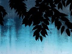Sous la pluie. Under the rain (Amiela40) Tags: rain leaf under pluie bleu feuille sous contemporaryartsociety whaticallart