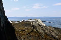 Hangin Around (Erica Robyn) Tags: ocean sky seaweed nature coast maine newengland driftwood ledge islesboro islesboromaine ericarobynphotography ericarobyn