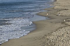 Barra Beach03 (abels.) Tags: blue sea white color praia beach wet birds azul cores design mar fly photo sad gaivotas areia seagull footprints pegadas abels voar molhada voo passaros flickraward abelsaraiva