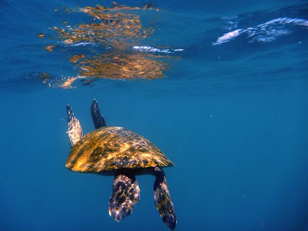 RYALE_Galapagos_Underwater-14
