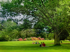 Old Westbury Gardens (NataThe3) Tags: park flowers summer sky people tree green nature grass leaves garden landscape picnik oldwestburygardens