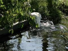 DSC04971 (lordnoize) Tags: pond cumbria carlisle hammonds hammondspond upperby currock