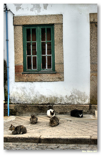 5 cats by VRfoto