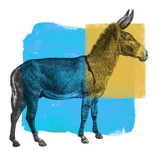 Democratic confusion
