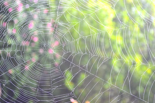 spiderweb by ellajohn