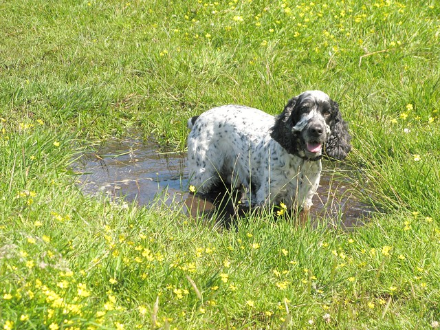 cooling his wee paws | Emma Lamb