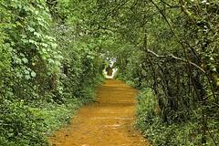 Into the Unknown (Smirfman) Tags: uk light woodland coast path walk sony kitlens devon alpha a550 18200mmpaignton