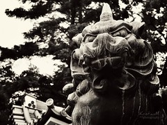 Hear Me Roar! (kristian.eric) Tags: park bw white black monochrome statue japan japanese kyoto lion gargoyle legend guardian mythical d90 krism 18105mm kristianm kristianeric