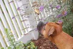 The Puppy Stares at a Butterfly