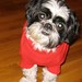 "Shi Tzu at Christmas • <a style=""font-size:0.8em;"" href=""https://www.flickr.com/photos/42033369@N08/5993148976/"" target=""_blank"">View on Flickr</a>"