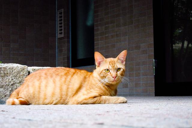 Today's Cat@2011-07-31