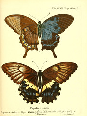 n108_w1150 (BioDivLibrary) Tags: smithsonian libraries butterflies lepidoptera sil institution pictorialworks bhl:page=12763297 dc:identifier=httpbiodiversitylibraryorgpage12763297