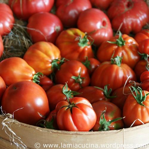 Hämiker Tomaten 2_2011 08 05_5340