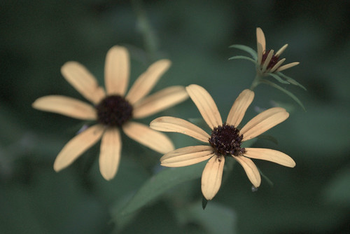 Autochromed yellow flowers