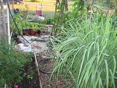 garden, sept 2011 012
